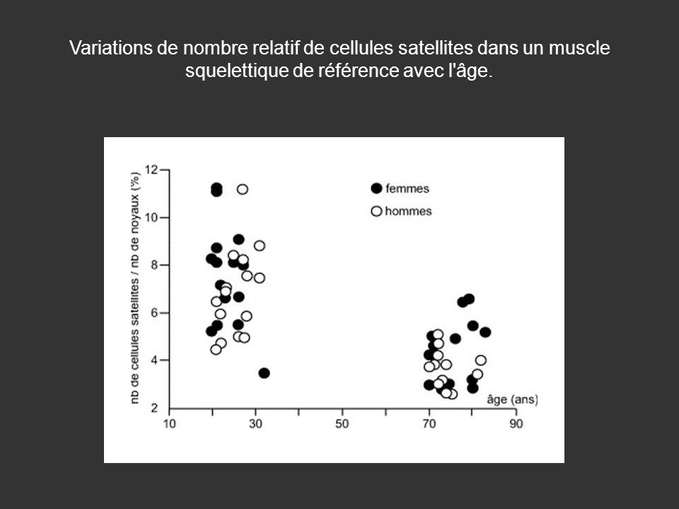 Variations de nombre relatif de cellules satellites dans un muscle squelettique de référence avec l âge.