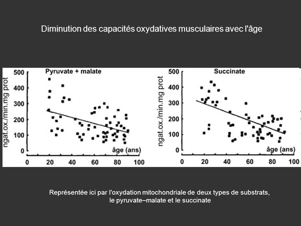 Diminution des capacités oxydatives musculaires avec l âge