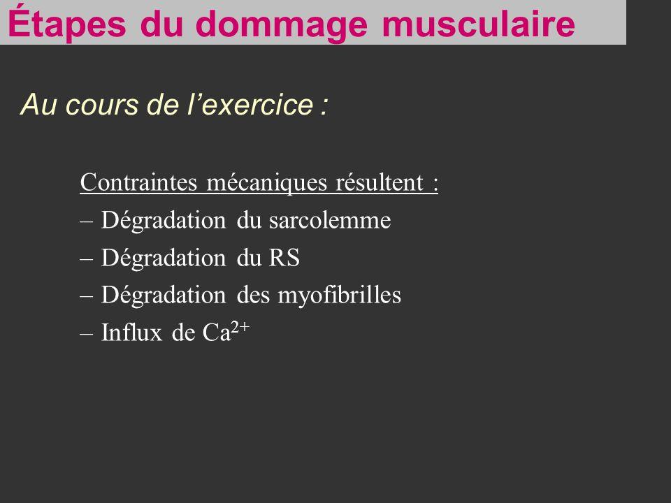 Étapes du dommage musculaire