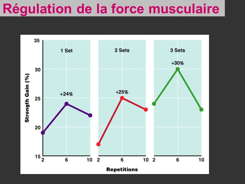 Régulation de la force musculaire