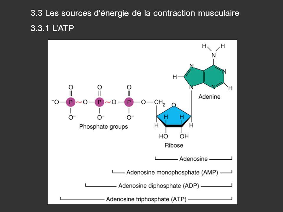 3.3 Les sources d'énergie de la contraction musculaire