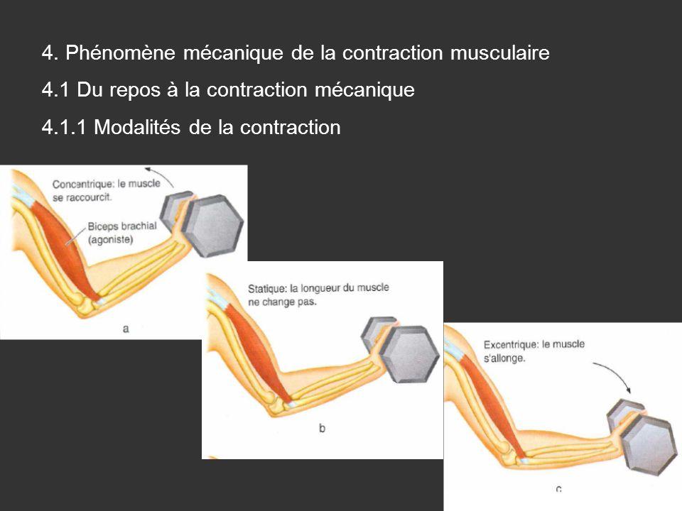 4. Phénomène mécanique de la contraction musculaire