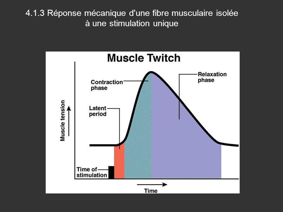 4.1.3 Réponse mécanique d une fibre musculaire isolée