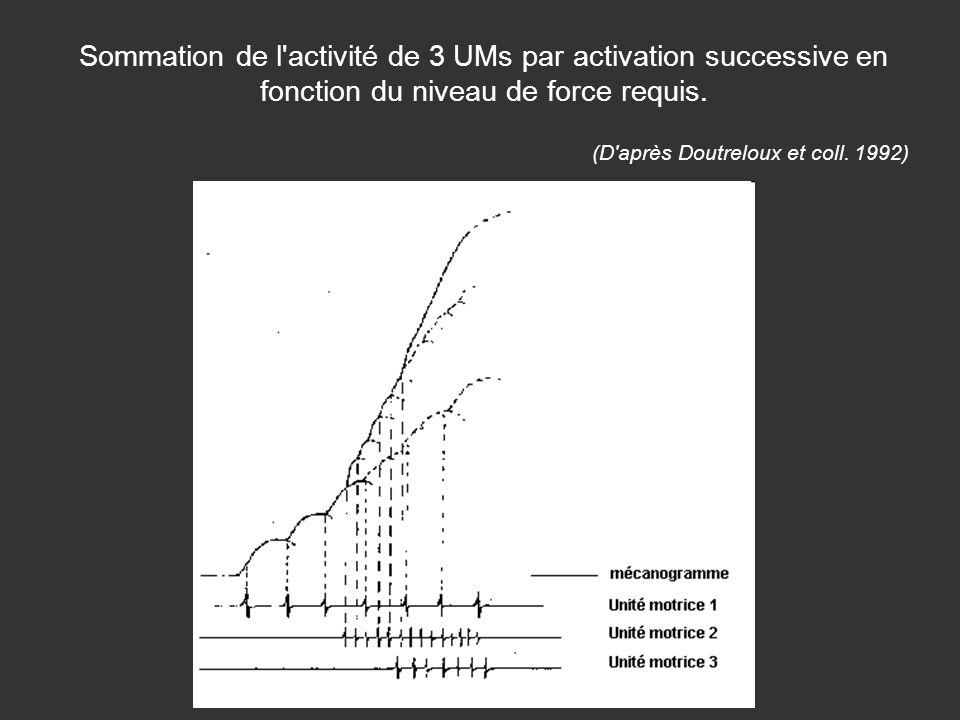 Sommation de l activité de 3 UMs par activation successive en fonction du niveau de force requis.