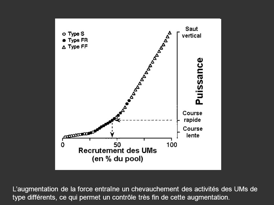 L'augmentation de la force entraîne un chevauchement des activités des UMs de type différents, ce qui permet un contrôle très fin de cette augmentation.