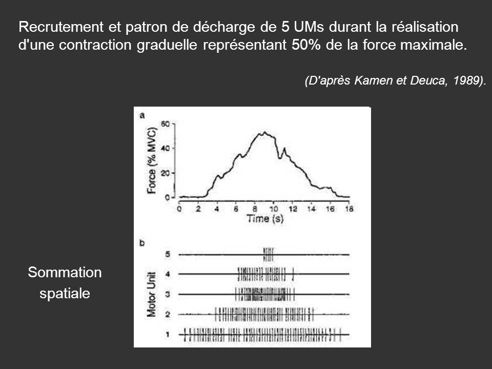Recrutement et patron de décharge de 5 UMs durant la réalisation d une contraction graduelle représentant 50% de la force maximale.