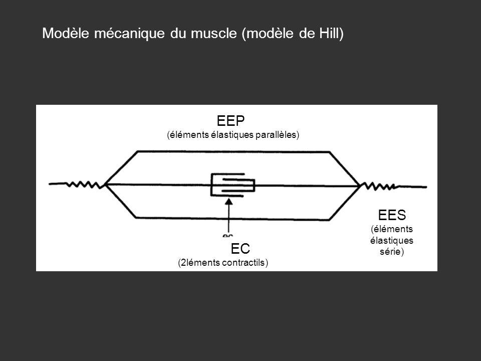 Modèle mécanique du muscle (modèle de Hill)
