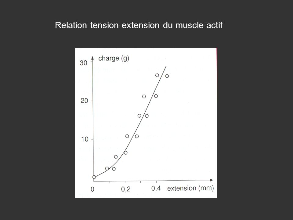 Relation tension-extension du muscle actif