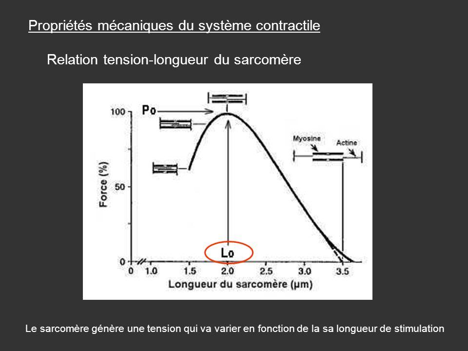 Propriétés mécaniques du système contractile