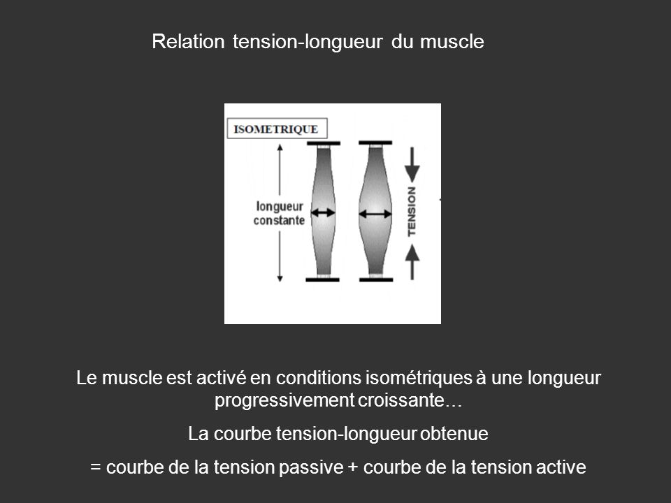 Relation tension-longueur du muscle