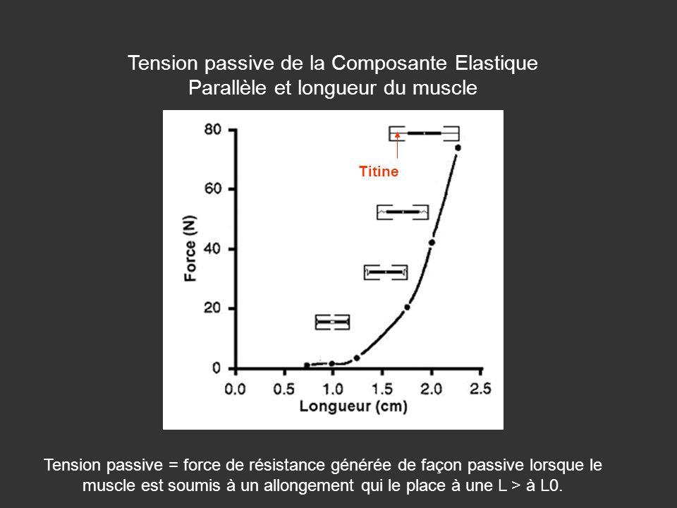 Tension passive de la Composante Elastique Parallèle et longueur du muscle
