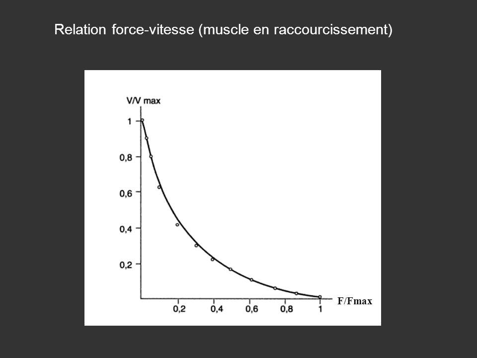 Relation force-vitesse (muscle en raccourcissement)
