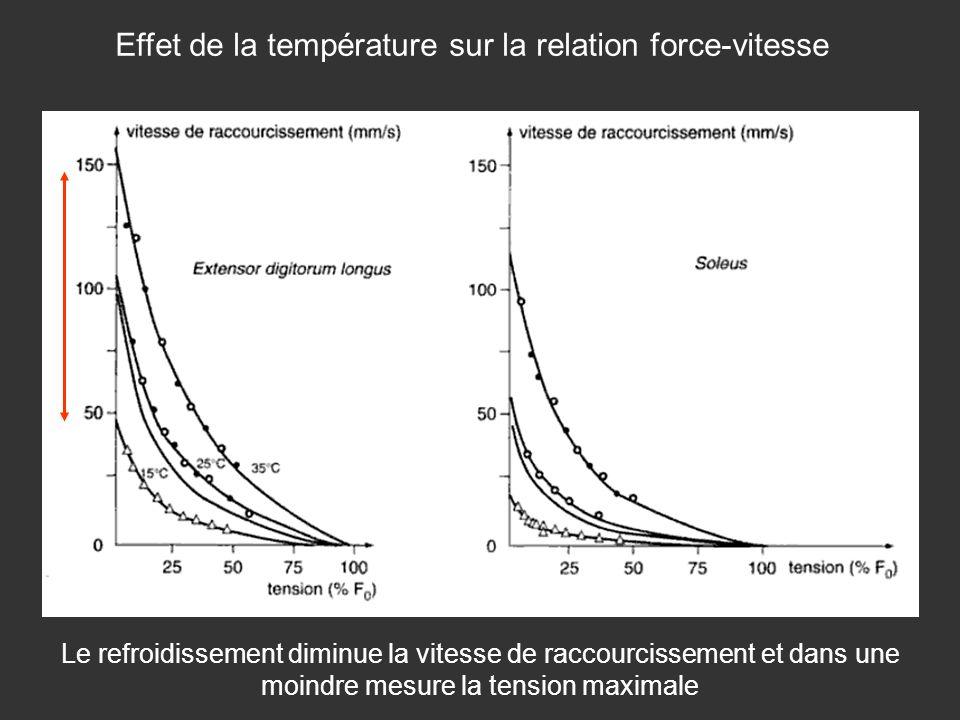 Effet de la température sur la relation force-vitesse
