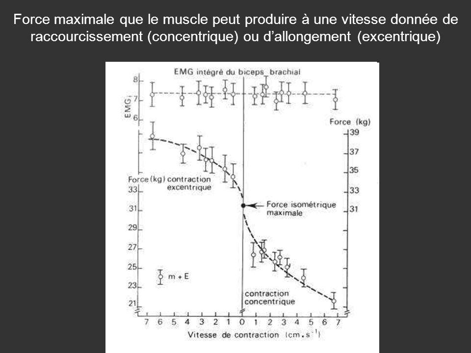 Force maximale que le muscle peut produire à une vitesse donnée de raccourcissement (concentrique) ou d'allongement (excentrique)