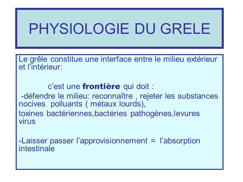 PHYSIOLOGIE DU GRELELe grêle constitue une interface entre le milieu extérieur et l'intérieur: c'est une frontière qui doit :