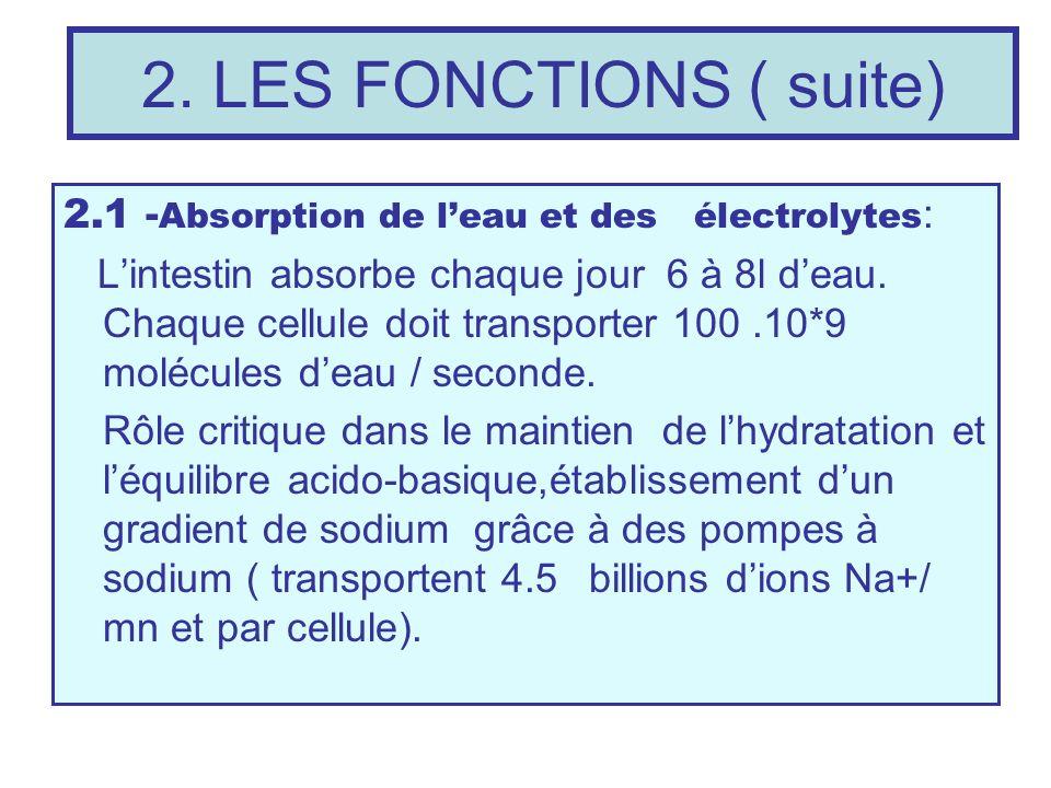 2. LES FONCTIONS ( suite) 2.1 -Absorption de l'eau et des électrolytes: