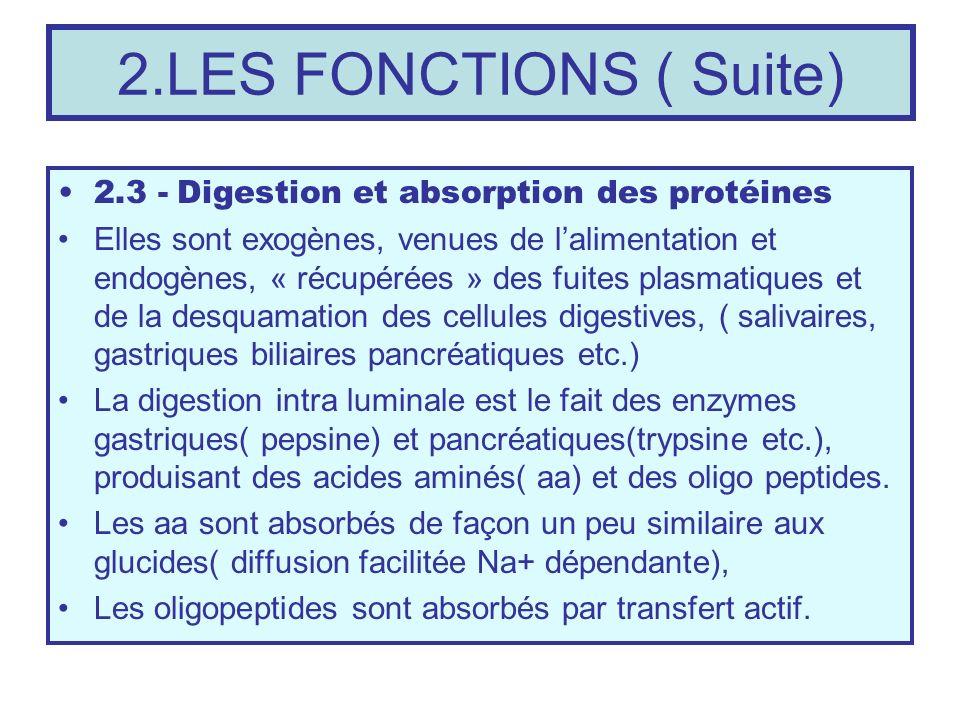 2.LES FONCTIONS ( Suite) 2.3 - Digestion et absorption des protéines