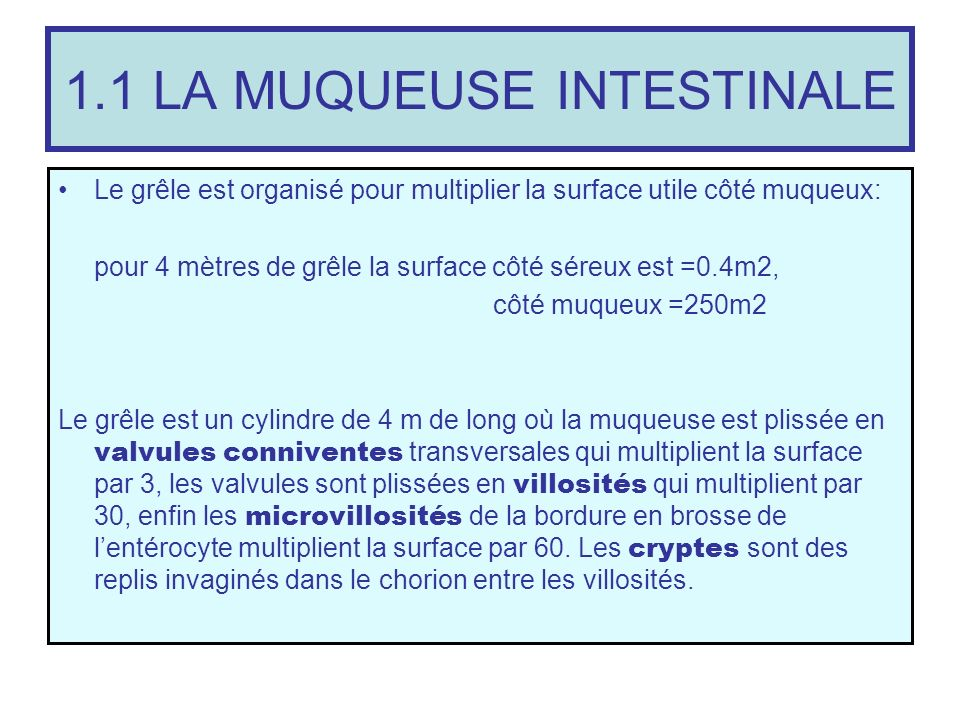 1.1 LA MUQUEUSE INTESTINALE