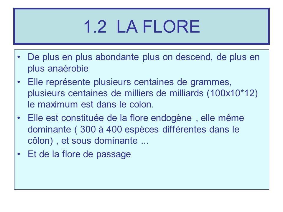 1.2 LA FLOREDe plus en plus abondante plus on descend, de plus en plus anaérobie.