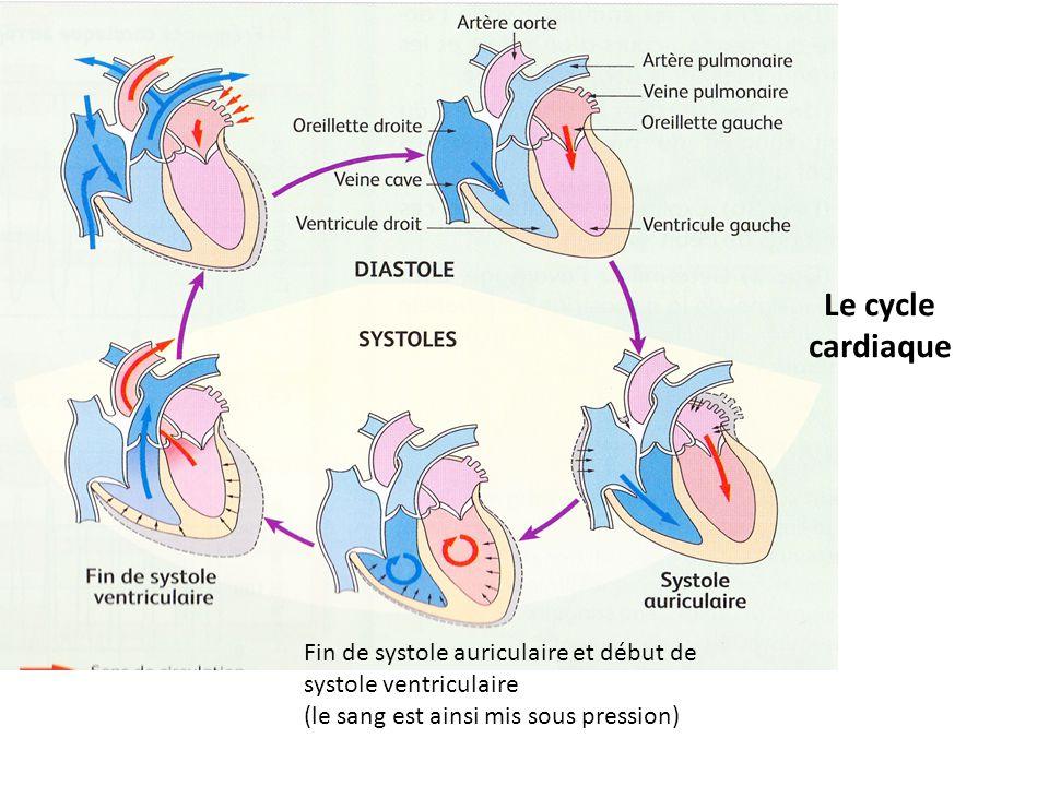 Le cycle cardiaque Fin de systole auriculaire et début de systole ventriculaire.