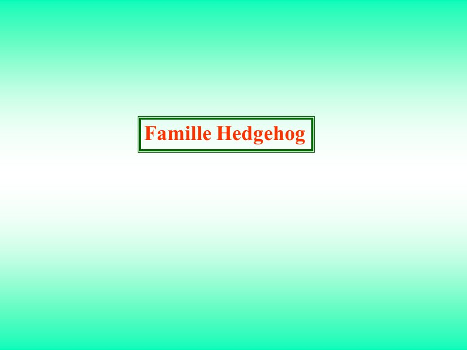 Famille Hedgehog
