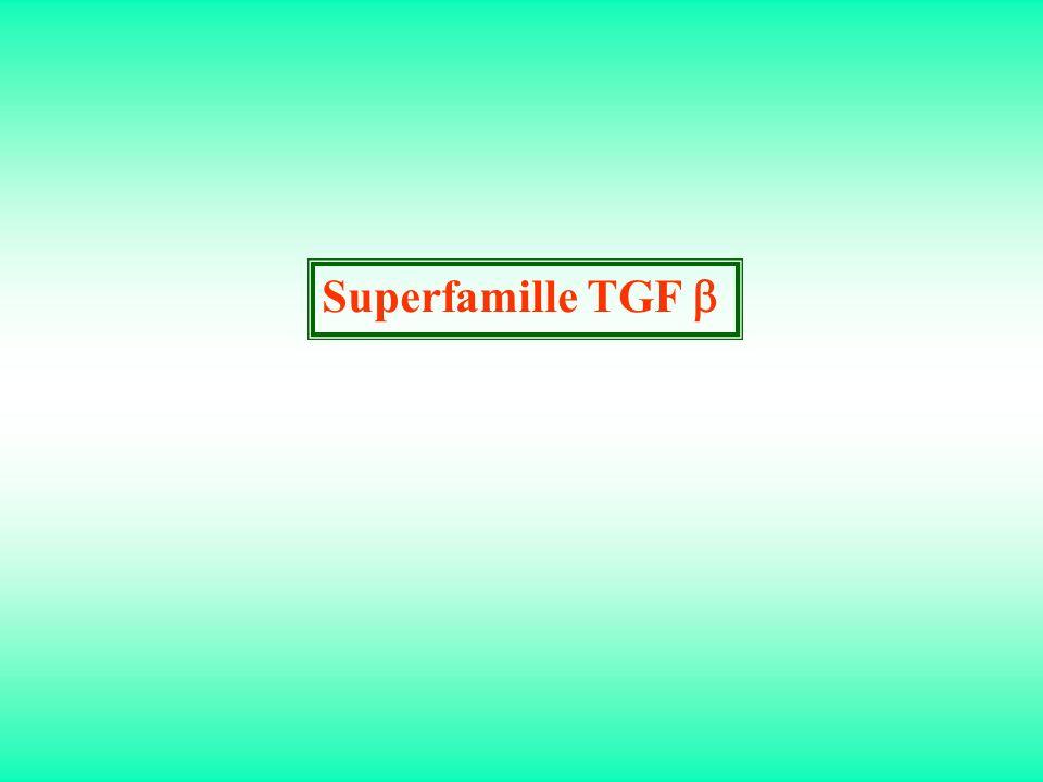 Superfamille TGF b