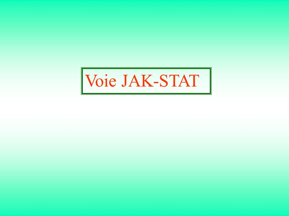 Voie JAK-STAT