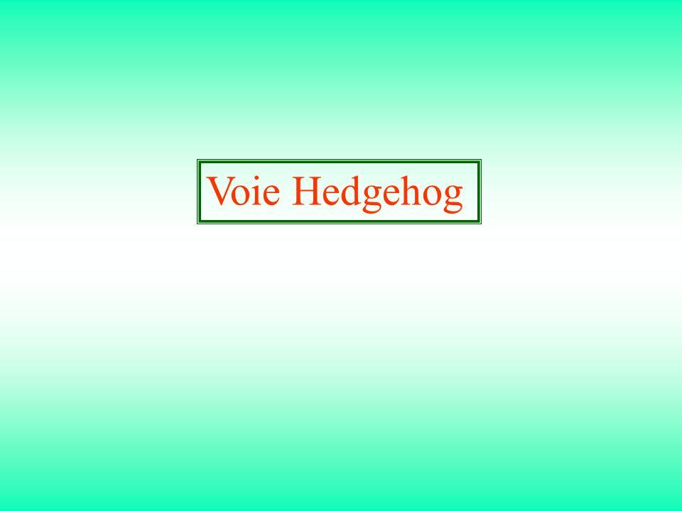 Voie Hedgehog