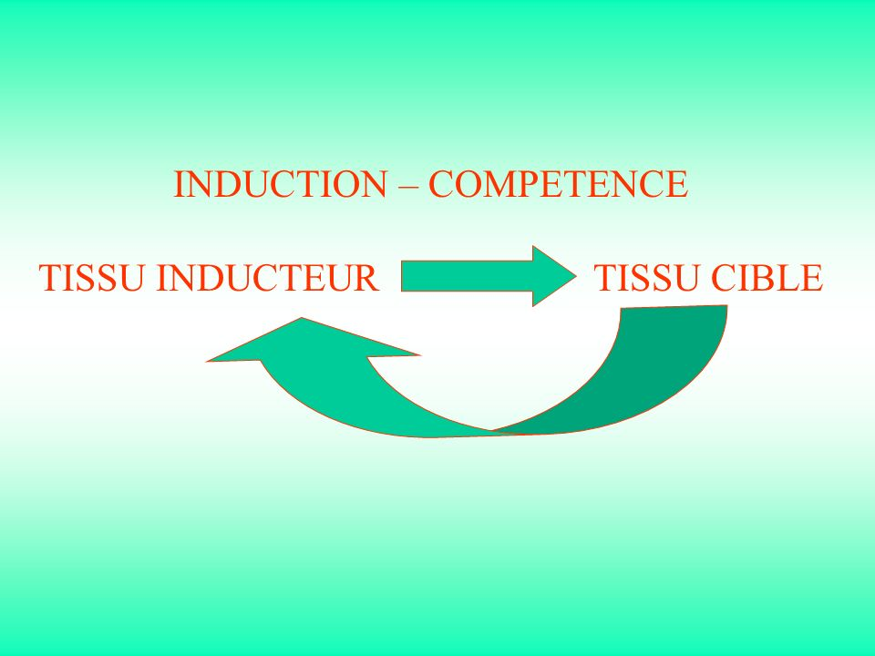 INDUCTION – COMPETENCE TISSU INDUCTEUR TISSU CIBLE