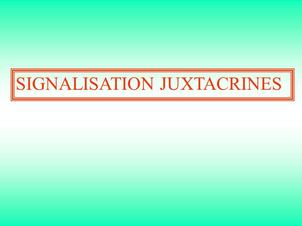 SIGNALISATION JUXTACRINES