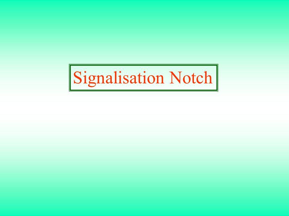 Signalisation Notch