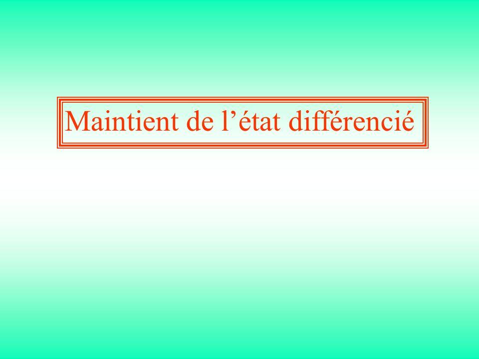 Maintient de l'état différencié