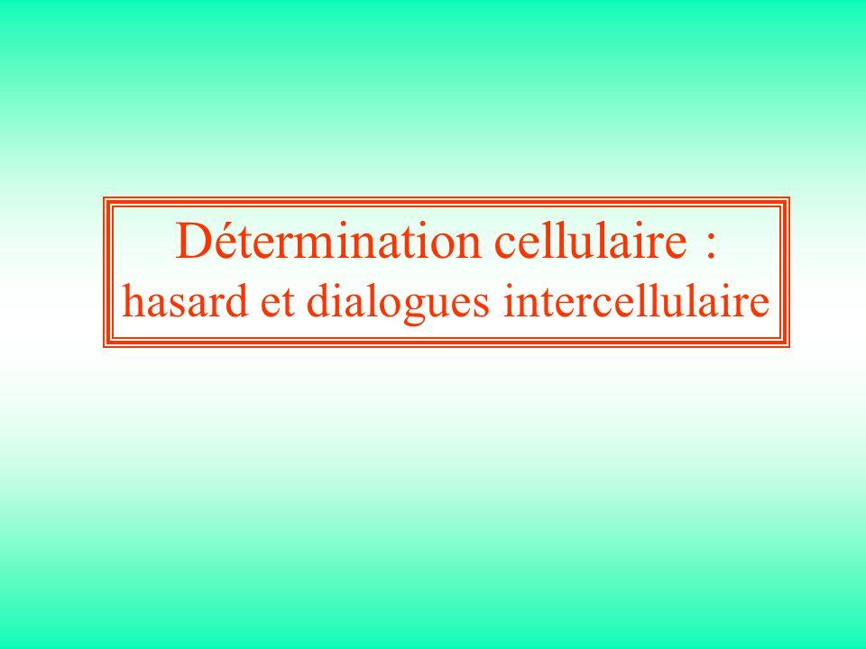 Détermination cellulaire :