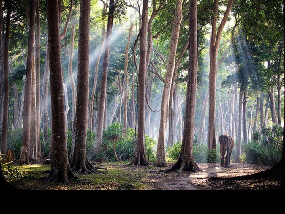 Éléphant des Iles Andaman dans l'Océan Indien