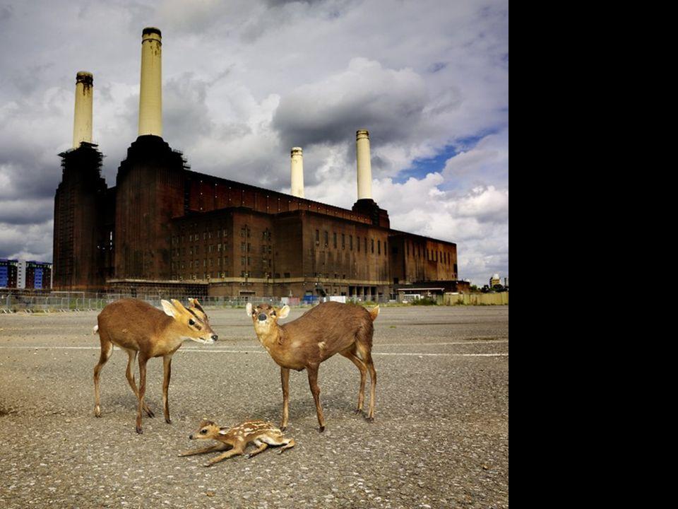 La centrale au charbon Battersea