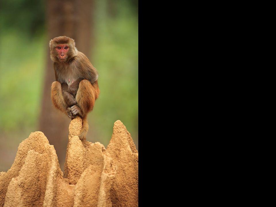 CHOIX DU PUBLIC NATURE Sur un nid de termites en Inde