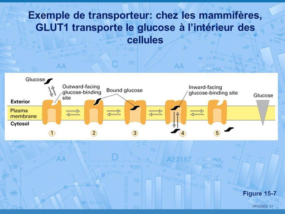 Exemple de transporteur: chez les mammifères, GLUT1 transporte le glucose à l'intérieur des cellules