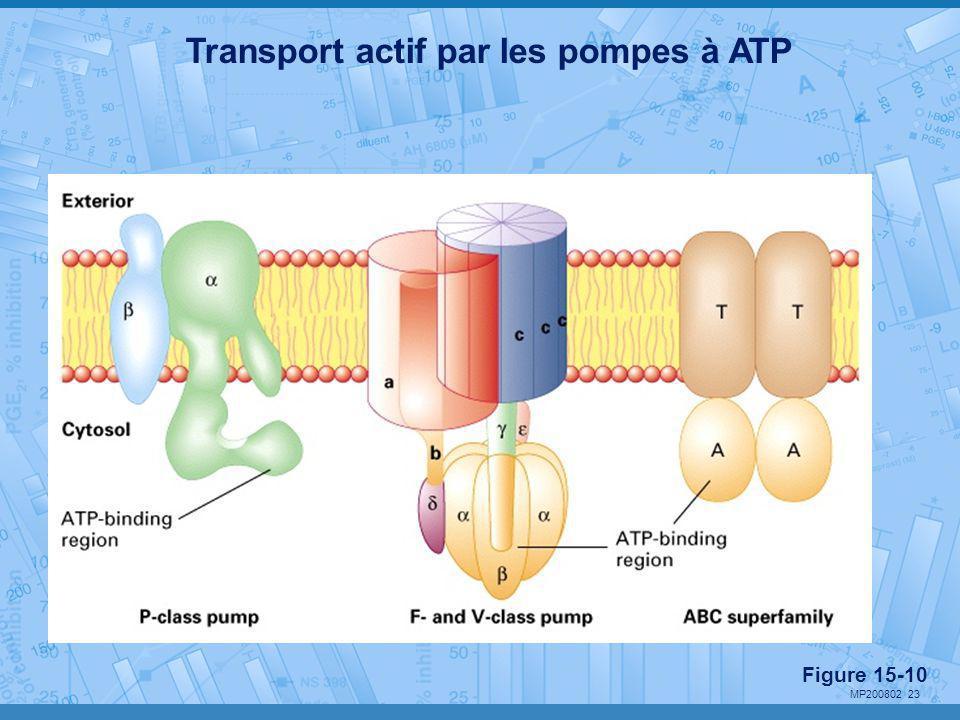Transport actif par les pompes à ATP