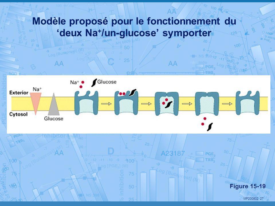 Modèle proposé pour le fonctionnement du 'deux Na+/un-glucose' symporter