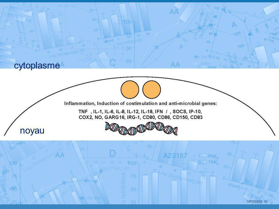 cytoplasme noyau