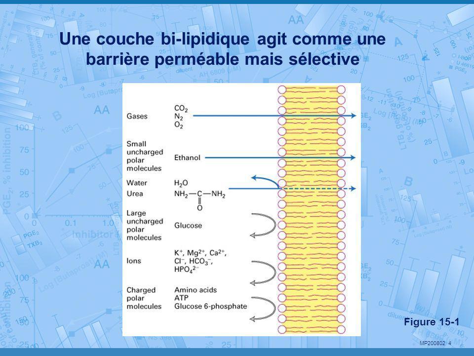 Une couche bi-lipidique agit comme une barrière perméable mais sélective