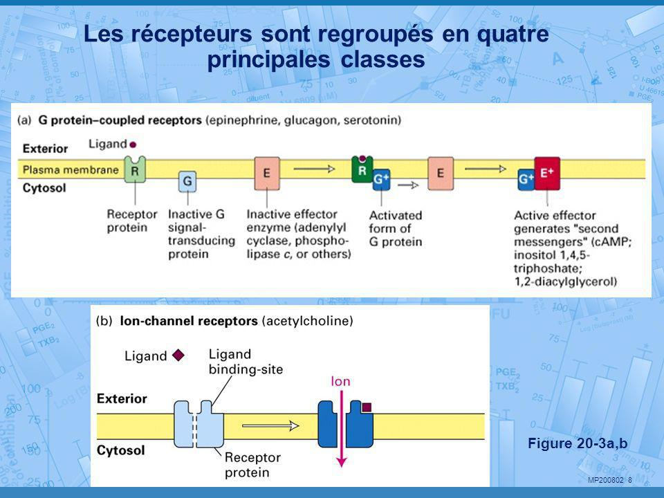 Les récepteurs sont regroupés en quatre principales classes
