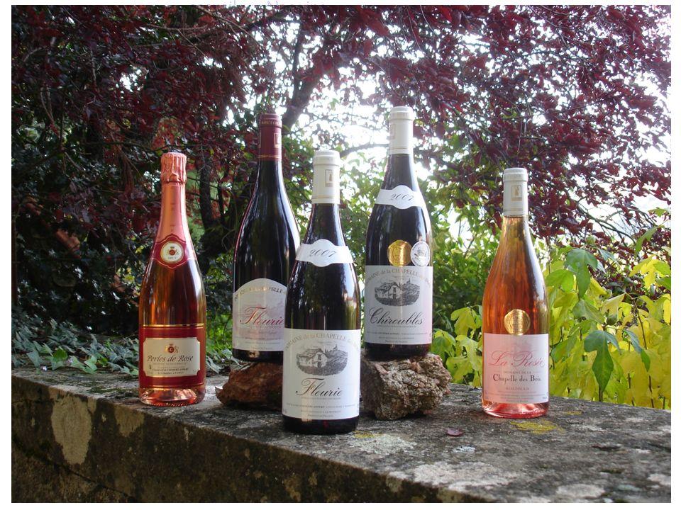 accueil Nos vins