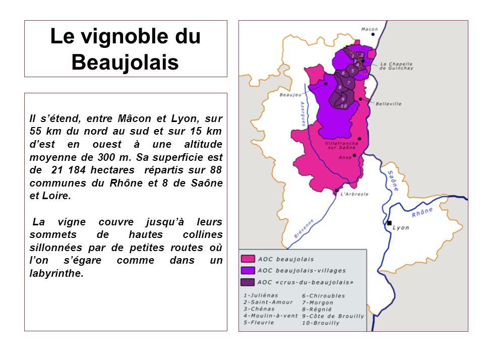 Le vignoble du Beaujolais