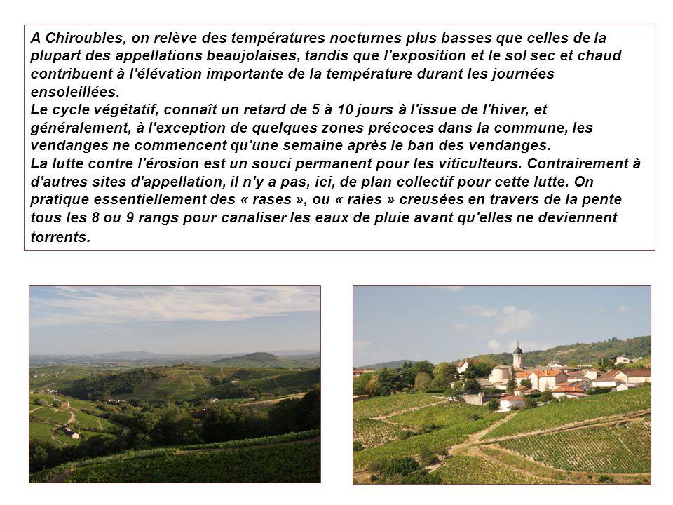 A Chiroubles, on relève des températures nocturnes plus basses que celles de la plupart des appellations beaujolaises, tandis que l exposition et le sol sec et chaud contribuent à l élévation importante de la température durant les journées ensoleillées.