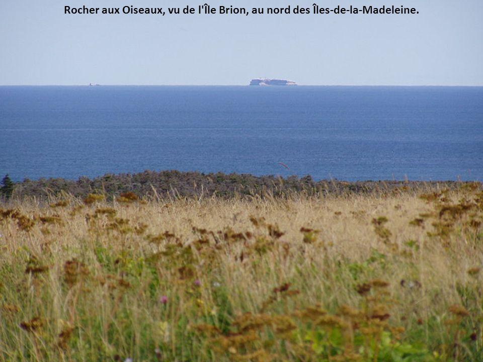 Rocher aux Oiseaux, vu de l Île Brion, au nord des Îles-de-la-Madeleine.