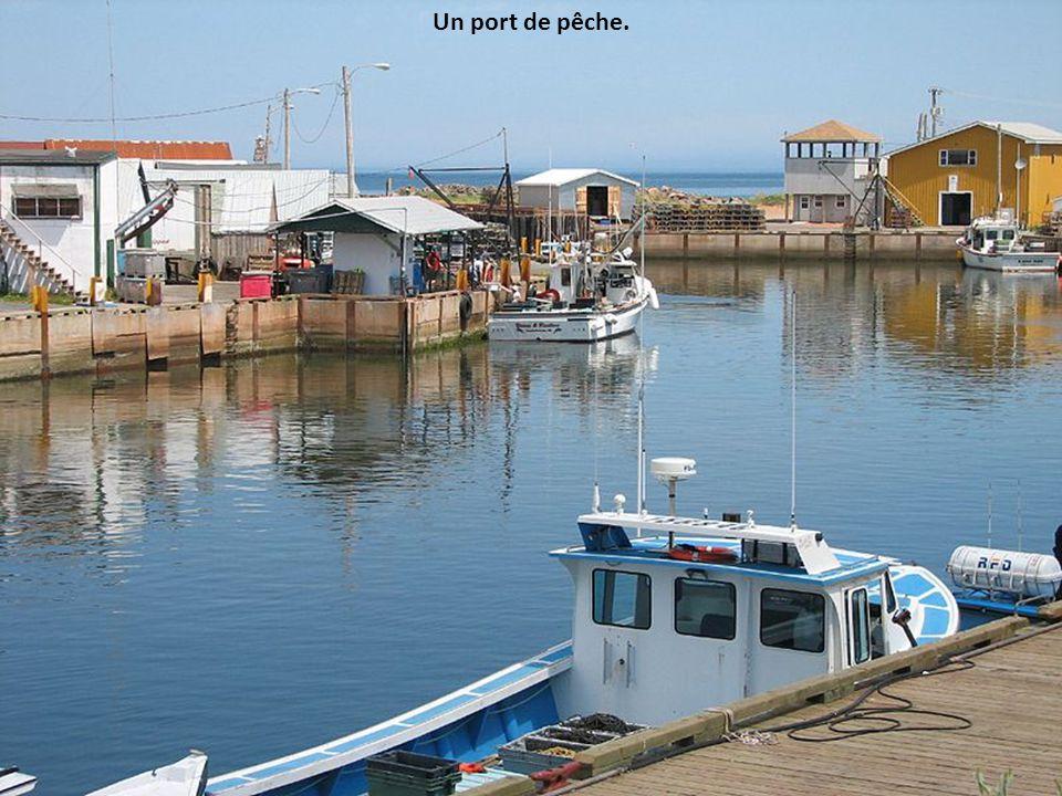 Un port de pêche.