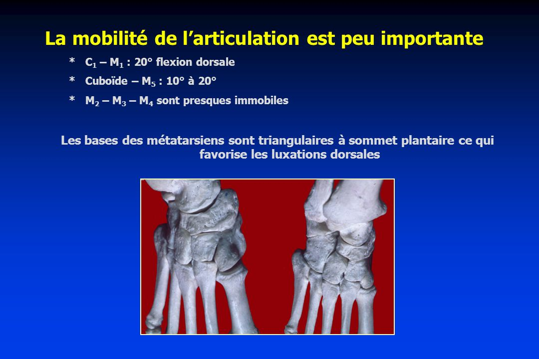 La mobilité de l'articulation est peu importante