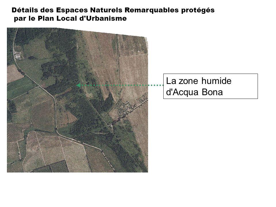 La zone humide d Acqua Bona