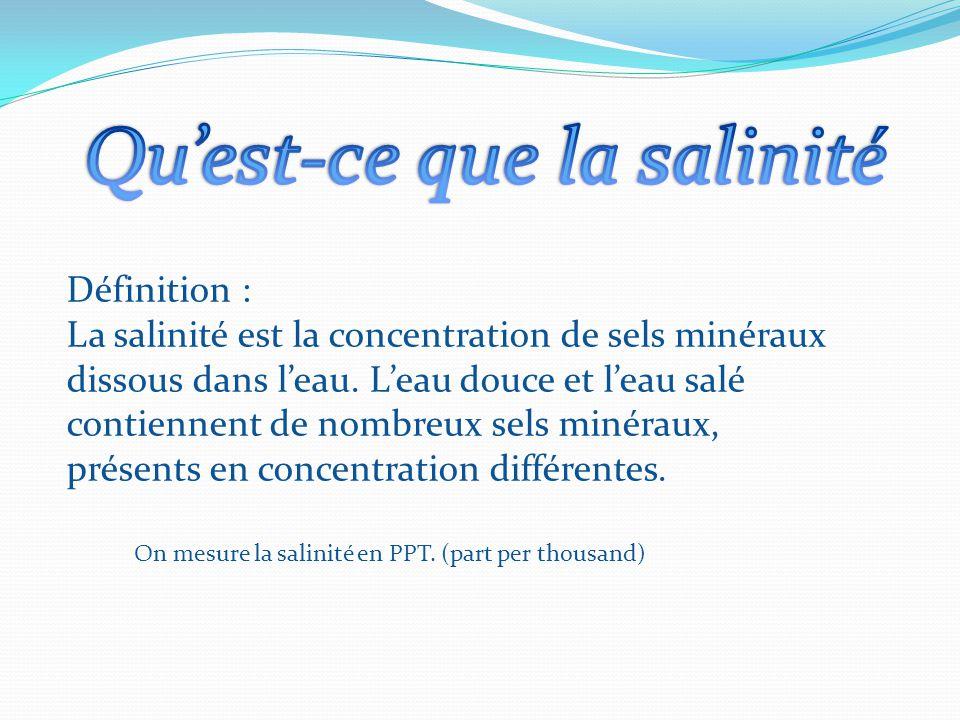 Qu'est-ce que la salinité